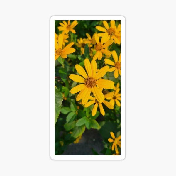 Sunflower Scenic Background Sticker