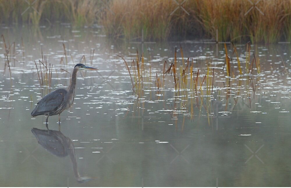 Heron There - Great Blue Heron, Algonquin Park, Canada by Jim Cumming