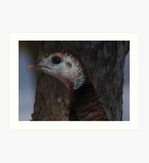 Portrait of a Wisconsin Wild Turkey Art Print