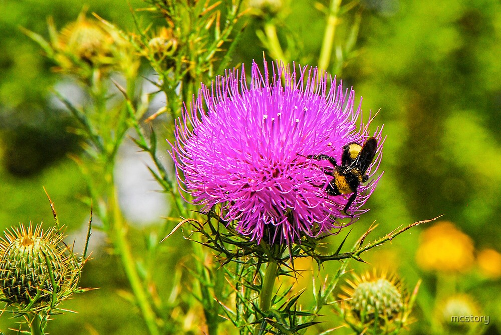 Thistle And Bee by Mary Carol Story