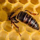 Queen Bee 2 by Mark Bangert