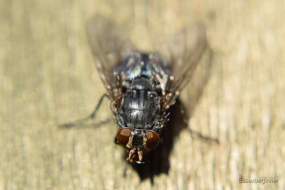 Who said flys are a pest! by Essexbeginner