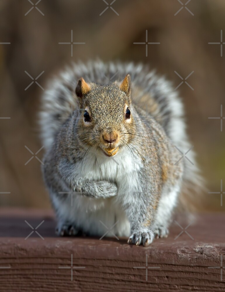 Stored Nuts - Grey Squirrel by Jim Cumming
