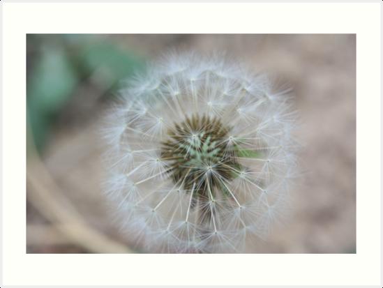 Dandelion by Lauren Morris