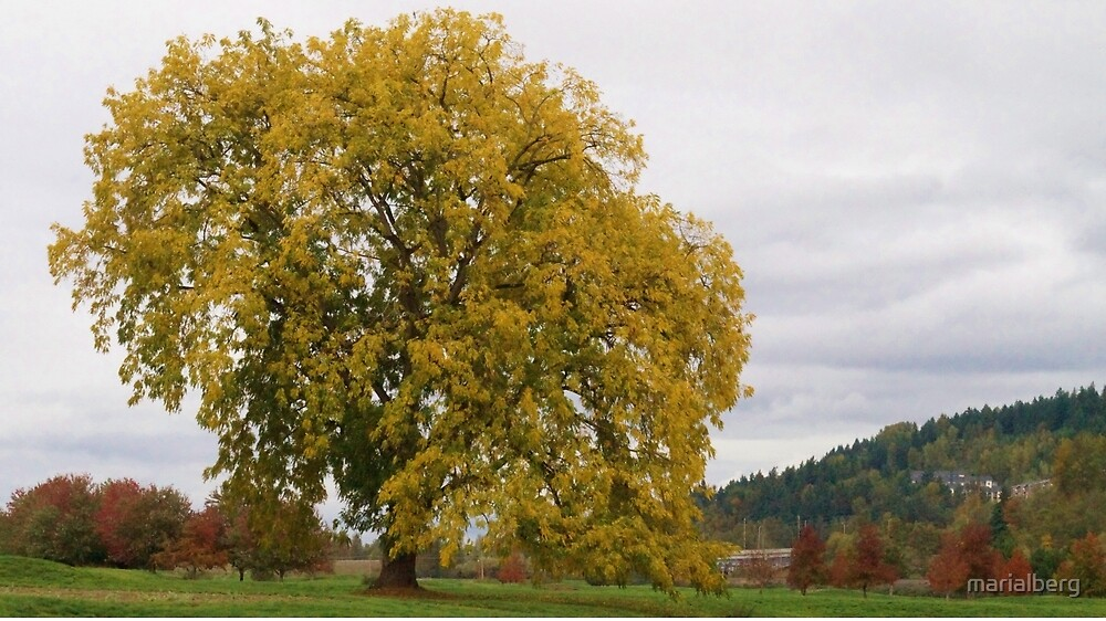 One Yellow Tree by marialberg