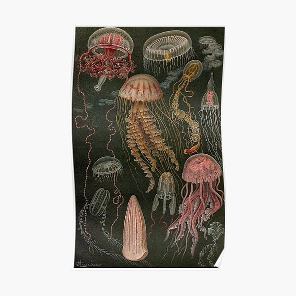 dark jellyfish poster Poster