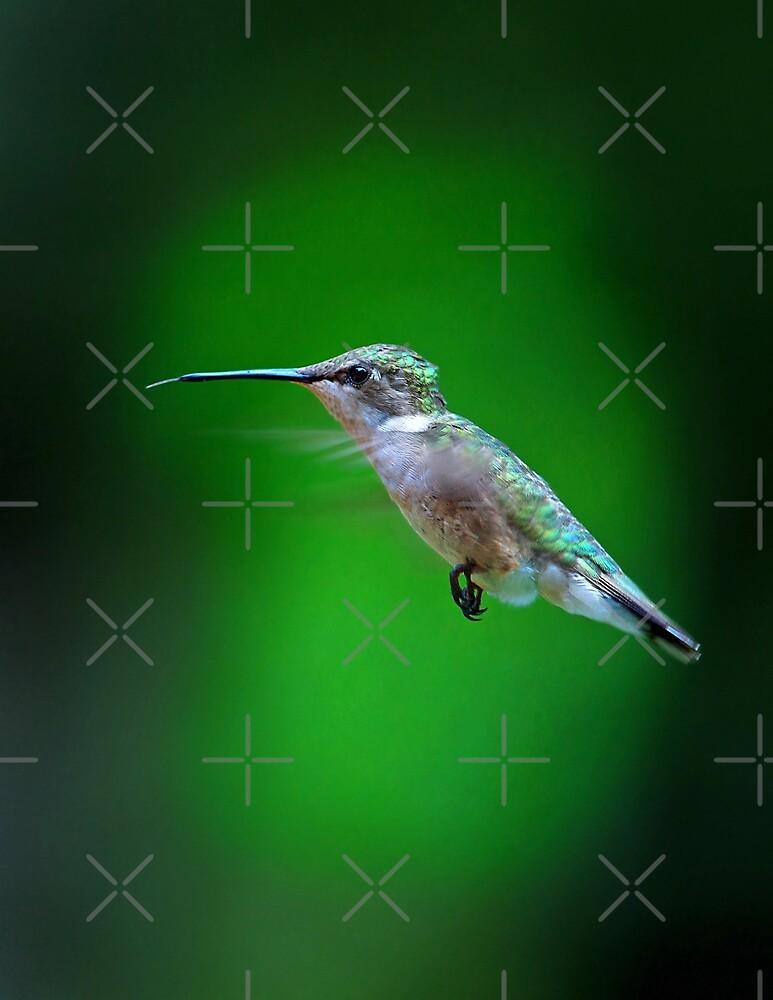 Tongue and Cheek - Ruby-throated hummingbird by Jim Cumming
