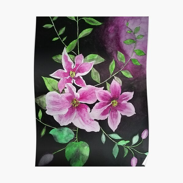 Purple pink clematis flowers watercolor painting against a dark background  Poster