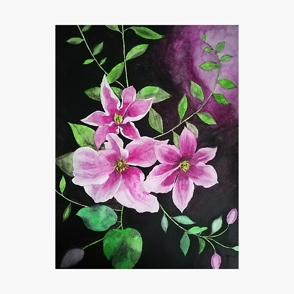 Purple pink clematis flowers watercolor painting against a dark background  Photographic Print
