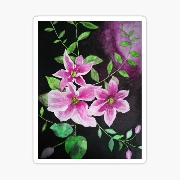 Purple pink clematis flowers watercolor painting against a dark background  Sticker
