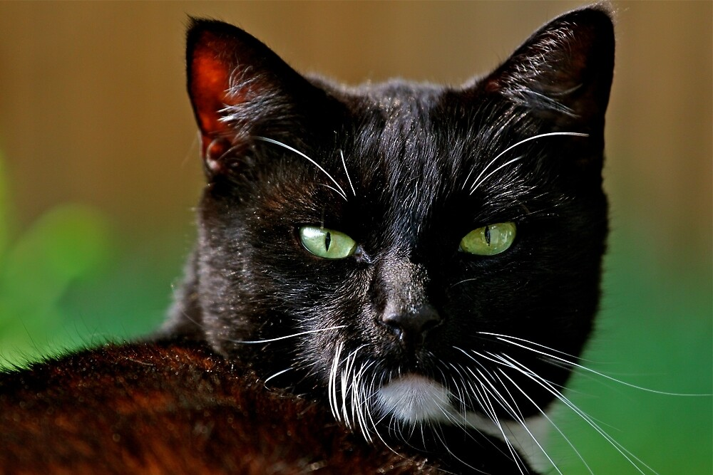 Green eyed black cat by LesterLevine