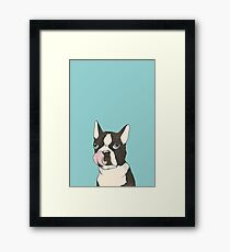 Hungry Boston Terrier (Black) Framed Print