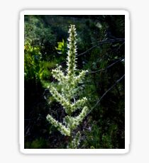 Blooming Swamp Onion Sticker