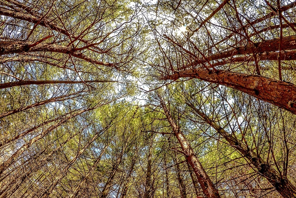 Lay down and look at the trees by GalaxyMcNeill