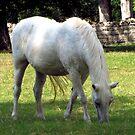Plantation Horse by aprilann
