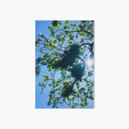 blue skies and trees Art Board Print