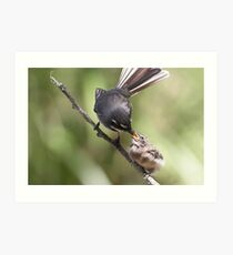 Grey Fantail and chick ~ Thanks Mum  Art Print