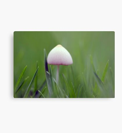 A tiny white mushroom hiding in the grass Metal Print