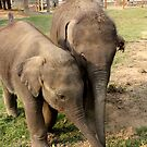 A Friendship Between Baby Elephants by katy fotography