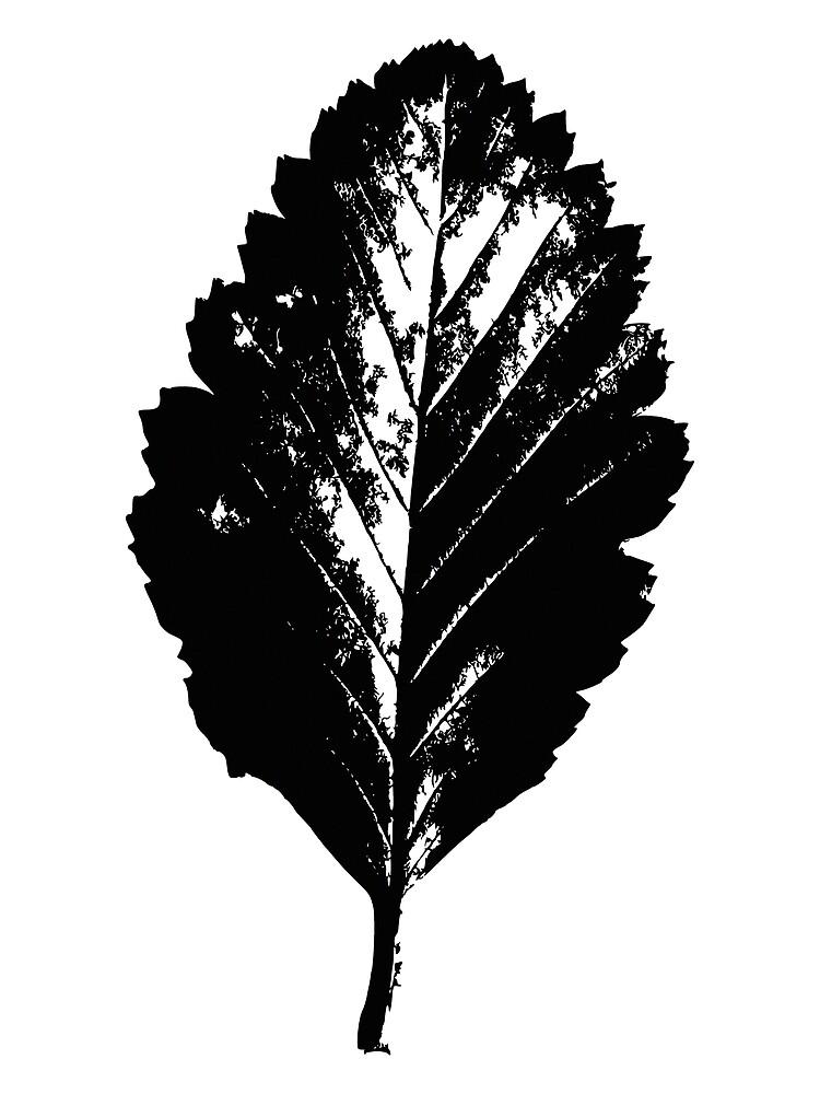 Black and white leaf by Thomas Terceira