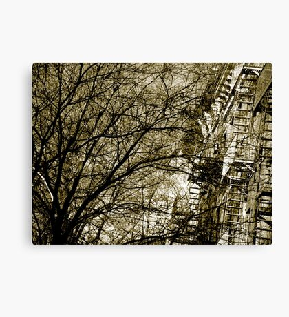 abstraction in Trees in NYC Canvas Print