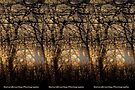 Abstract Woods by NatureGreeting Cards ©ccwri