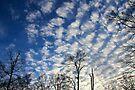 Evening Sky 0090 by NatureGreeting Cards ©ccwri