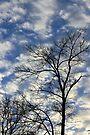 Evening Sky 0091 by NatureGreeting Cards ©ccwri