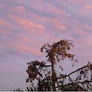 Evening Sky by Shulie1