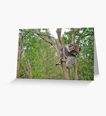 Koala, Near Melbourne, Australia Greeting Card
