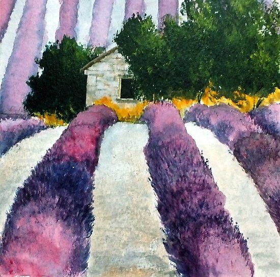 Lavender by peteceiliog