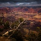 Tree Branches at The Mather Point by Daniel H Chui