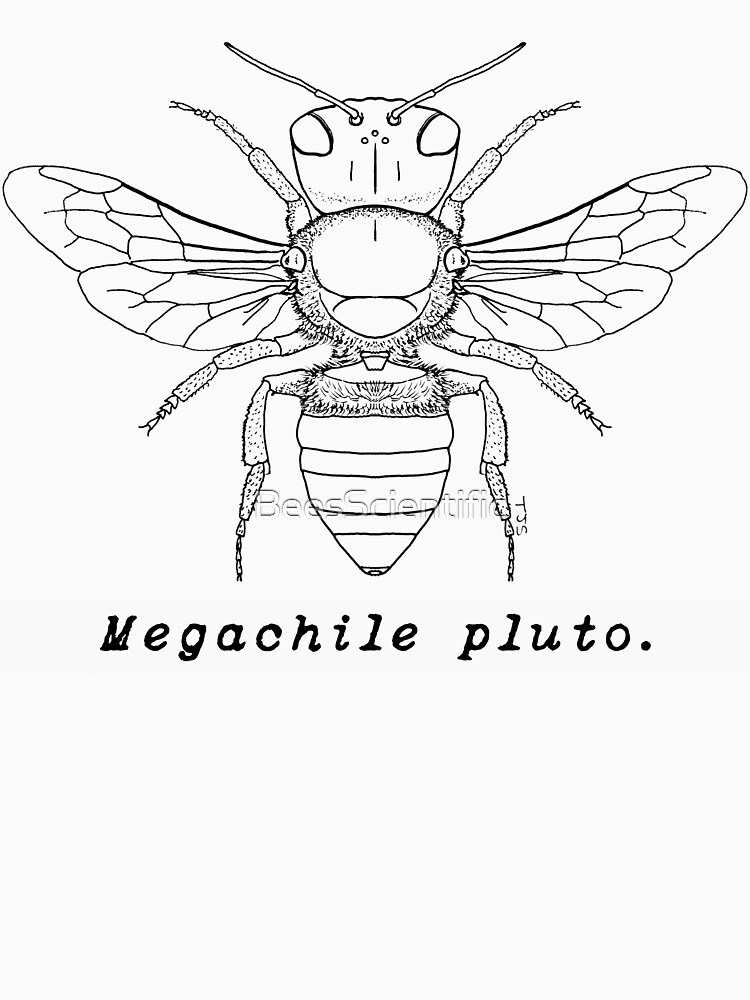 Wallace's Giant Bee, Megachile pluto - Black Print by BeesScientific