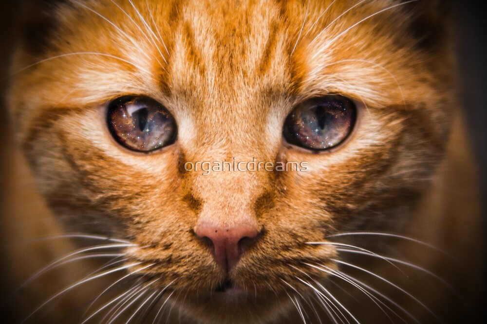 Space Cat Eyes by organicdreams