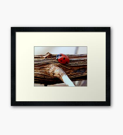 I saw it on the Grapevine Framed Print