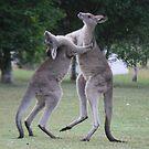 Lets Dance by LESLEY BUtler