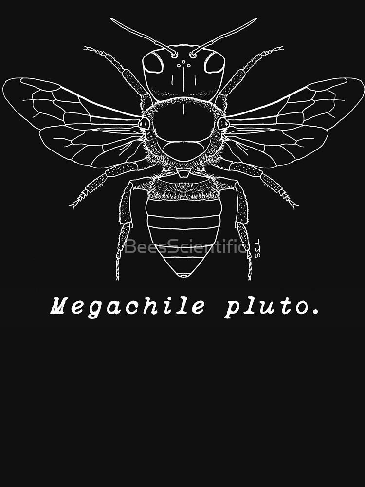 Wallace's Giant Bee, Megachile pluto - White Print by BeesScientific