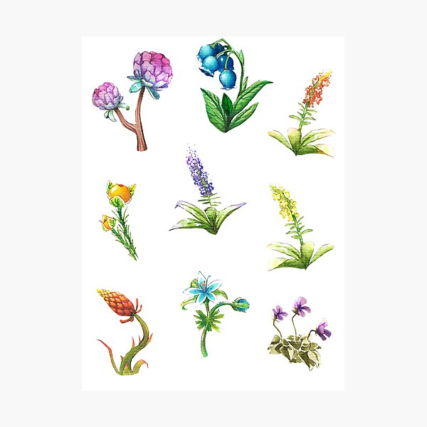 BOTW flowers Photographic Print