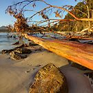Fallen - Tree at Adventure Bay HDR - Bruny Island, Tasmania, Australia by PC1134