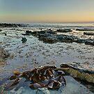 Bull Kelp - HDR (Bruny Island, Tasmania, Australia) by PC1134