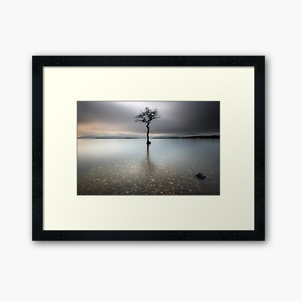 Loch Lomond Tree Framed Art Print