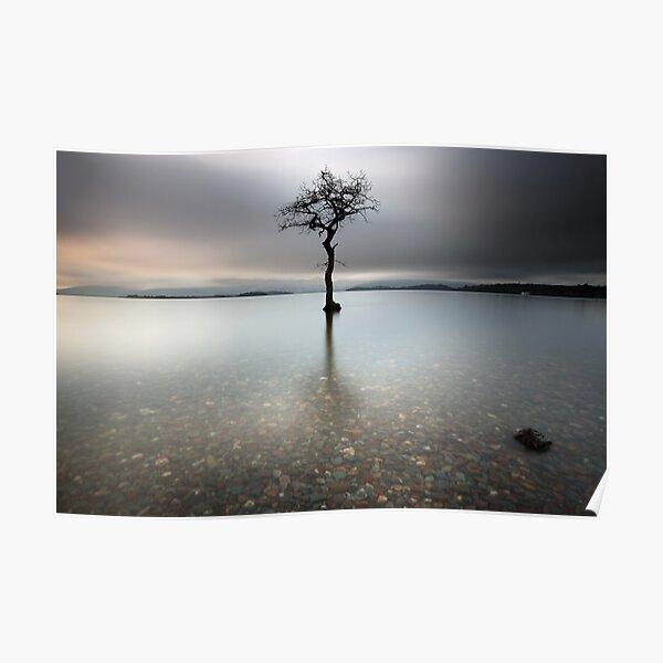 Loch Lomond Tree Poster