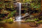 Great North Walk by vilaro Images