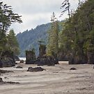 San Josef Bay Sea Stacks by Carrie Cole
