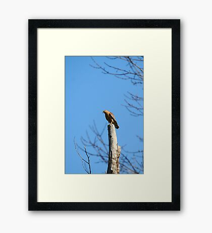 Lookin' for my love Framed Print