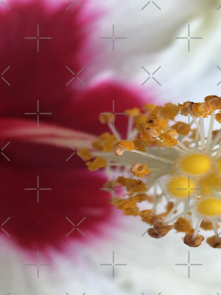 Closeup of Pretty Hibiscus Flower with Yellow Stamen by billingtonpix