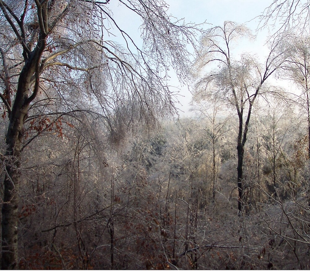 Ice storm by Robert Angier
