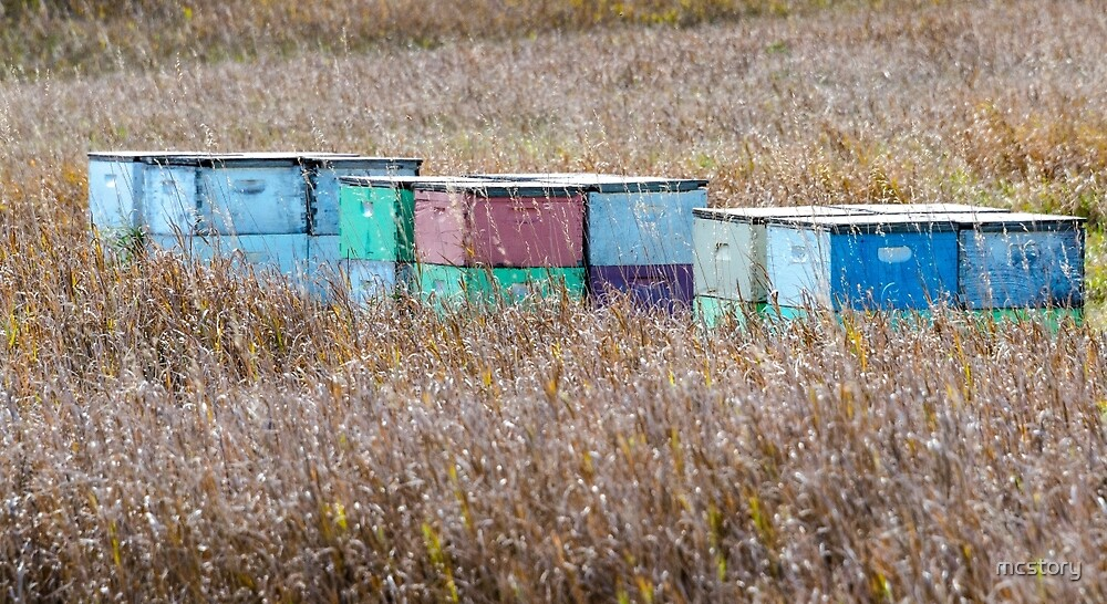 Bee Hives by mcstory