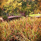 Autumn, Hedgley Dene Gardens by Roz McQuillan