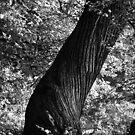 Woodland Twister by John Dunbar